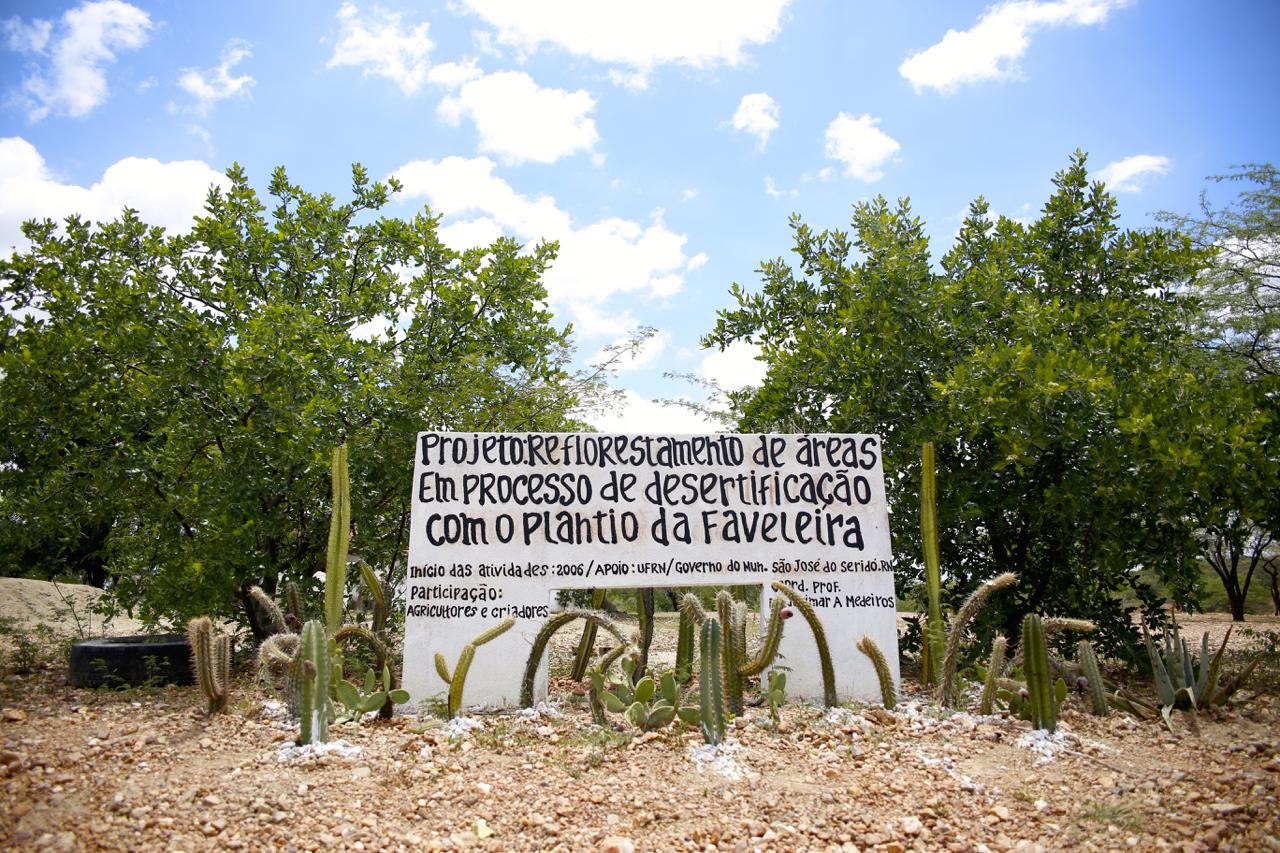 Esta planta da Caatinga ajuda no combate contra a desertificação no Brasil