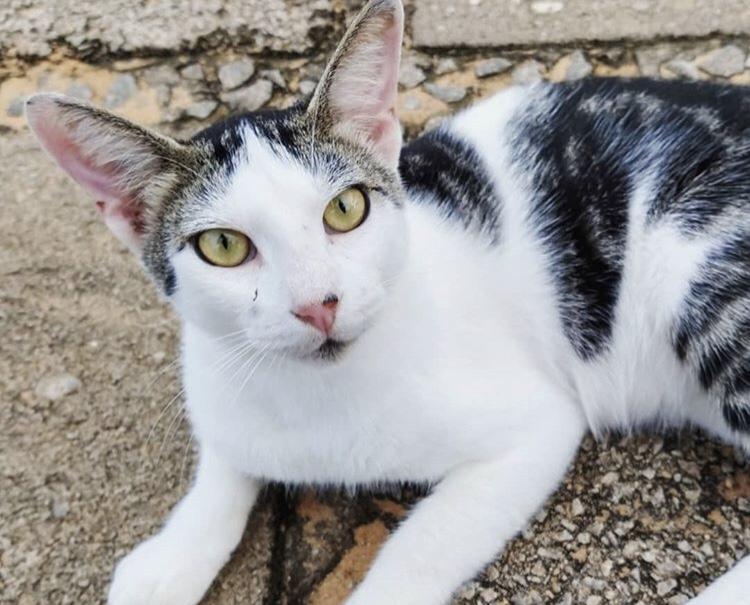Projeto ajuda resgatar gatinhos da UFRN